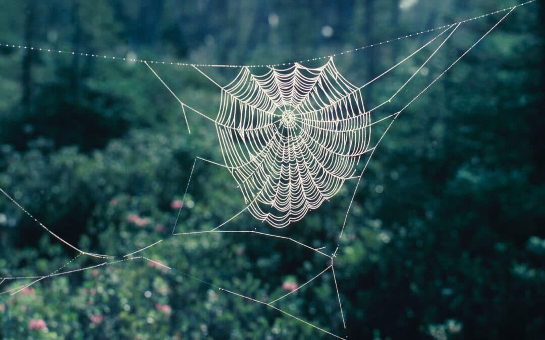 I'm No Longer Afraid of Spiders! A Therapists Experience Using the Flash Technique for Phobia