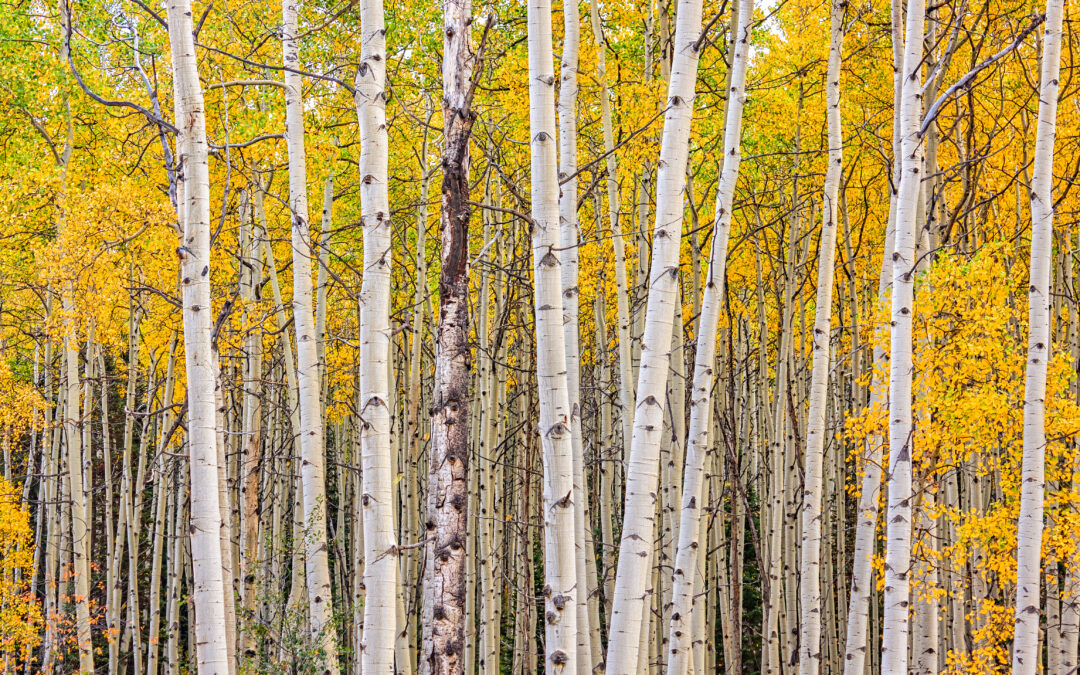 10 Tips to Boost Your Mood During the Fall and Winter Months